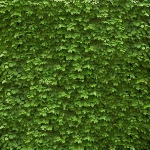 NEW YORK'S NEWEST GREEN NEIGHBOURHOOD