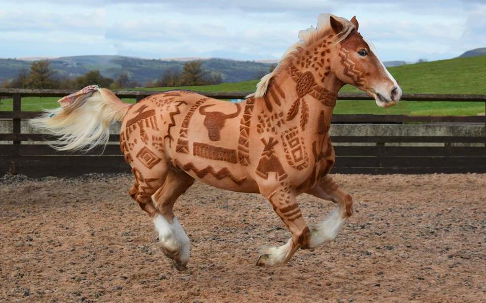 Melody Hames, la coiffeuse pour chevaux