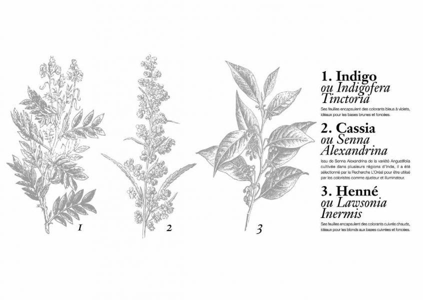 Ces 3 plantes sont au coeur de la première coloration 100% végétale et sans produit  d origine animale. 9d443dfdeca