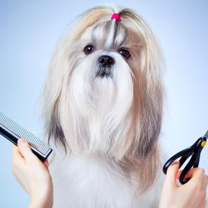 Amener son animal de compagnie en salon de coiffure